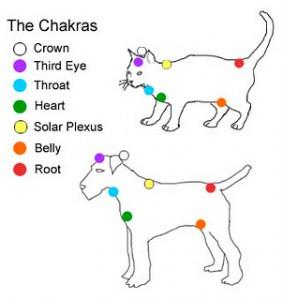 catDogChakras